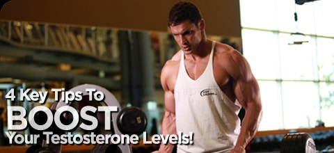 testosterone for muscles